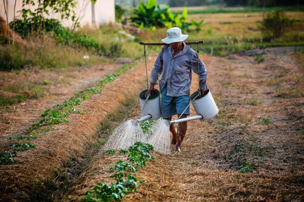 INSS: Quais são os requisitos para a aposentadoria rural?